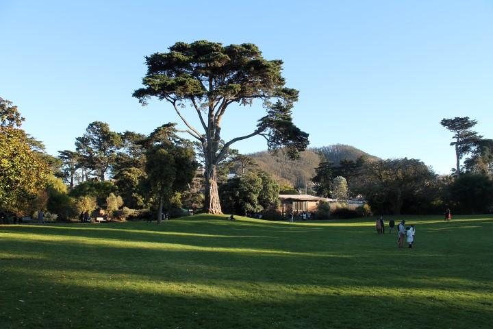 san-francisco-botanic-garden6.JPG