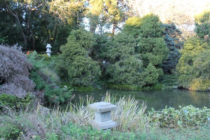 san-francisco-botanic-garden7.JPG