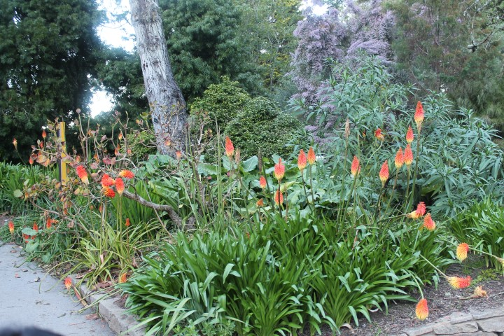 san-francisco-botanic-garden8.JPG