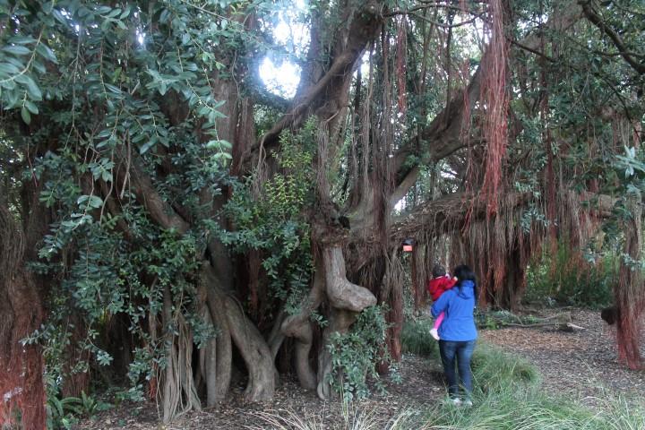 san-francisco-botanic-garden9.JPG