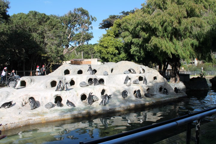 San-Francisco-Zoo15.JPG