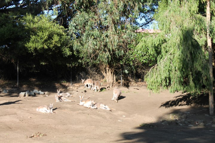 San-Francisco-Zoo2.JPG