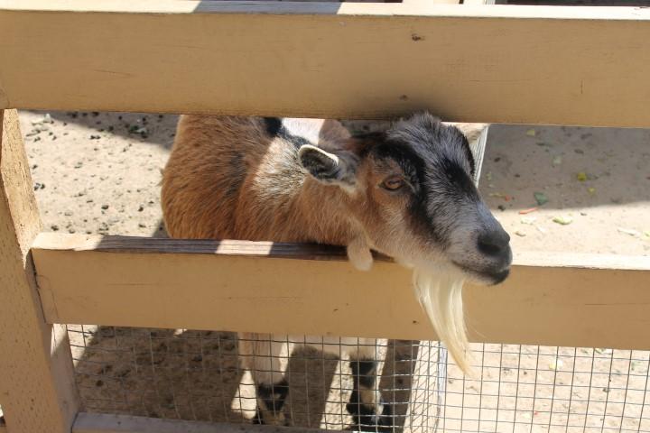 Zoomars_Petting_Zoo10.JPG