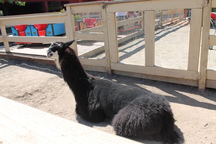 Zoomars_Petting_Zoo13.JPG