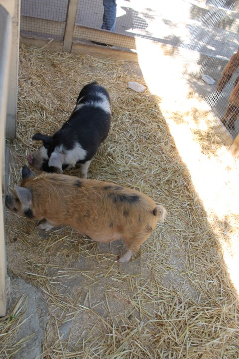 Zoomars_Petting_Zoo8.JPG