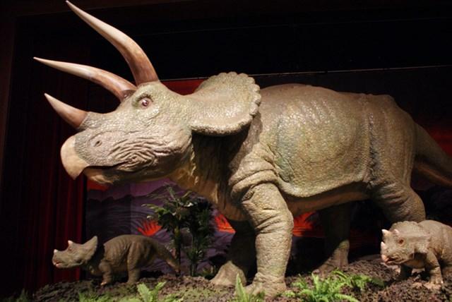 Museum_Of_Natural_History.JPG