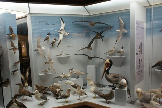 museum-of-natural-history-03.jpg