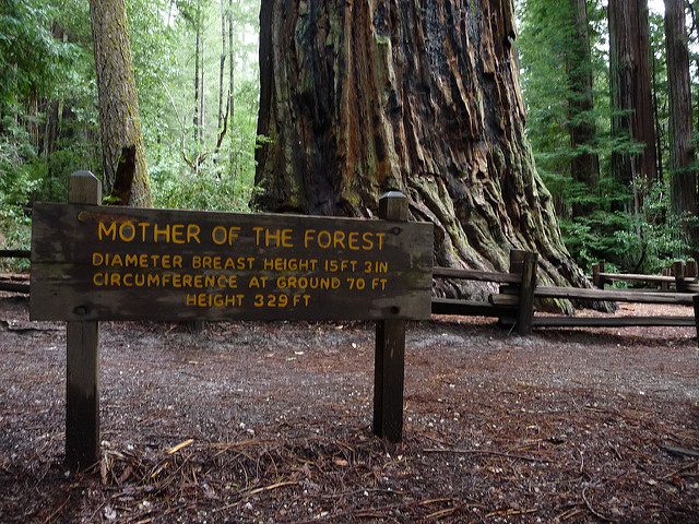 Big basin redwoods state park - Towne place at garden state park ...