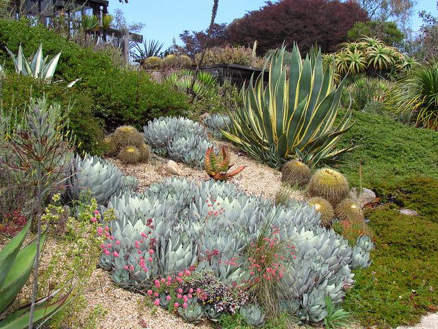 UCSC-Arboretum.jpg