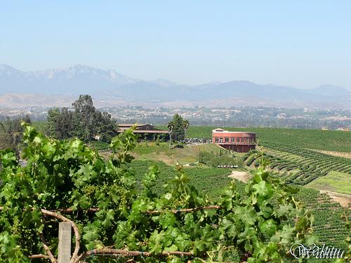 Falkner-Winery.jpg