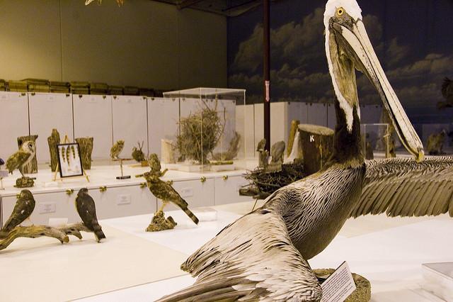 MuseumOfVenturaCounty1.jpg