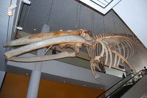 Denver_Museum_of_Nature_Science.jpg