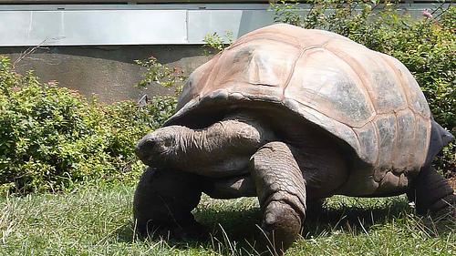 Beardsley-Zoo.jpg