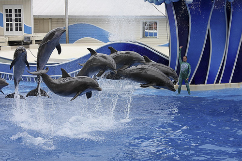 SeaWorld-Adventure-Park-Orlando.jpg