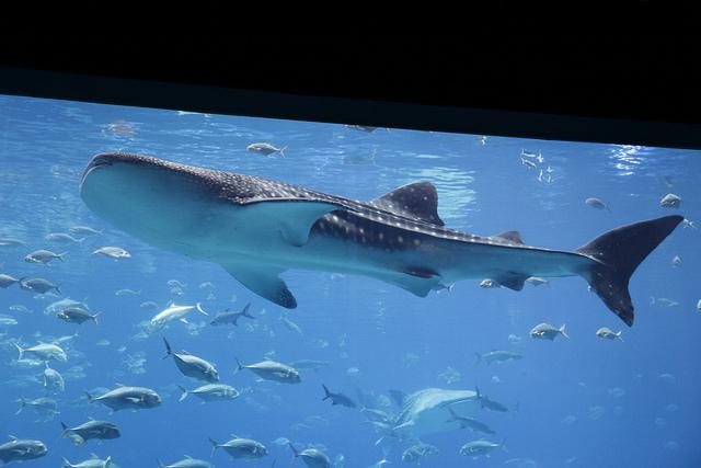 Georgia-Aquarium1.jpg