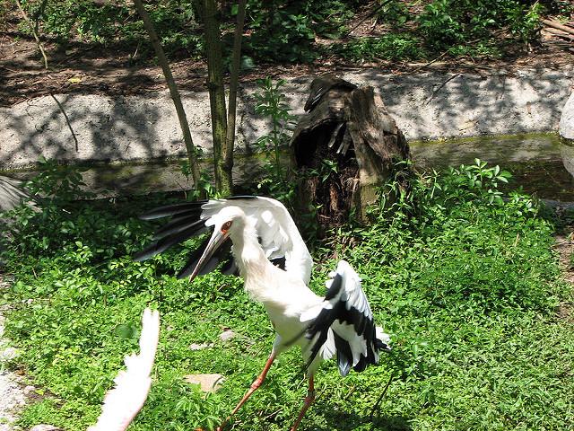 AudubonZoo11.jpg