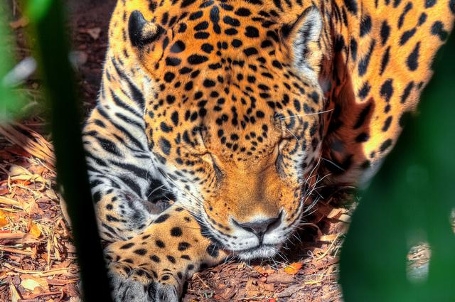AudubonZoo9.jpg
