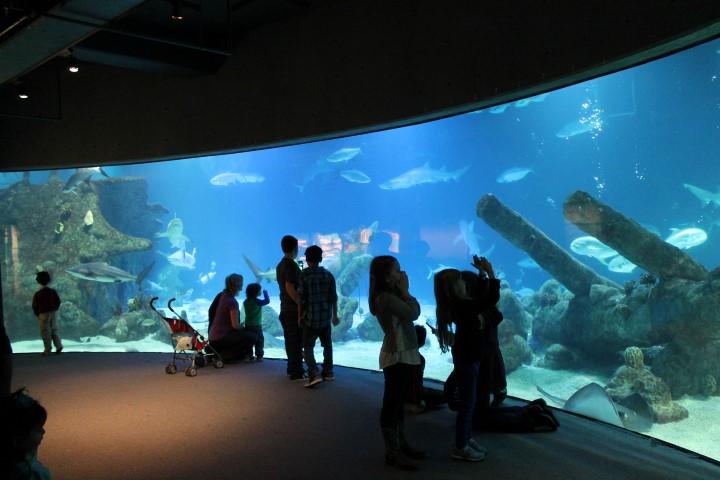 ABQ-Aquarium1.JPG