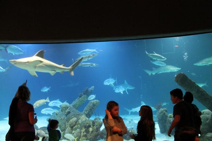 ABQ-Aquarium17.JPG