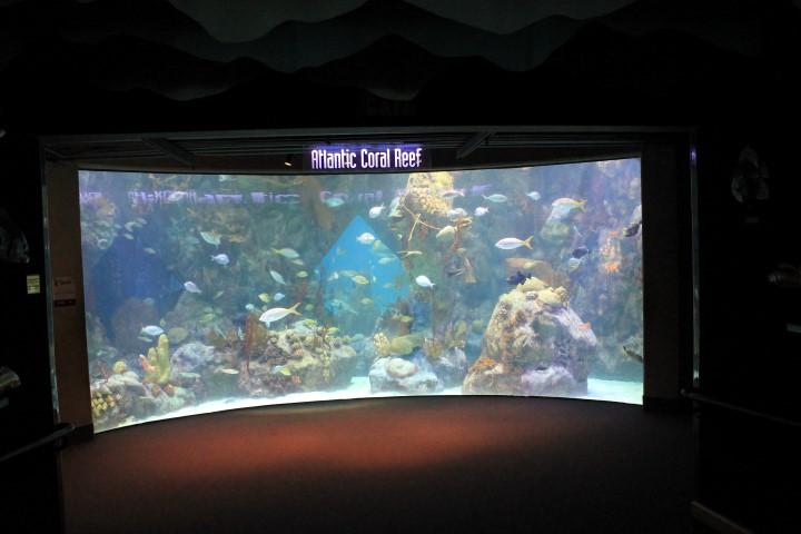 ABQ-Aquarium9.JPG