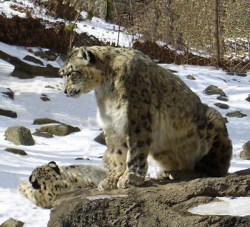 bronx-zoo-11.jpg