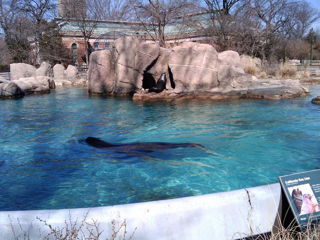 bronx-zoo-14.jpg