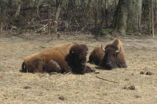 bronx-zoo-2.jpg