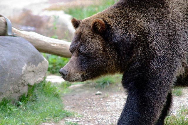 bronx-zoo-5.jpg