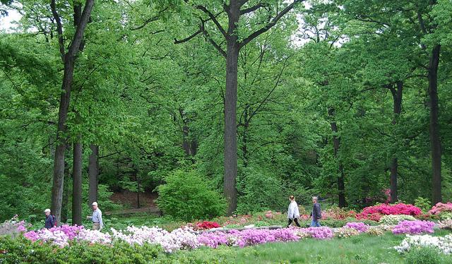 newyorkbotanicalgarden1.jpg