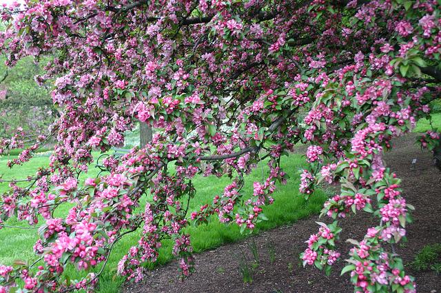 newyorkbotanicalgarden6.jpg