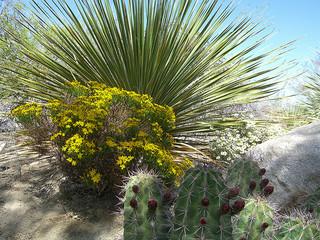 Chihuahuan_Desert_Gardens.jpg
