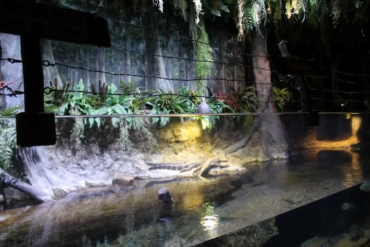 Houston-Aquarium3.JPG