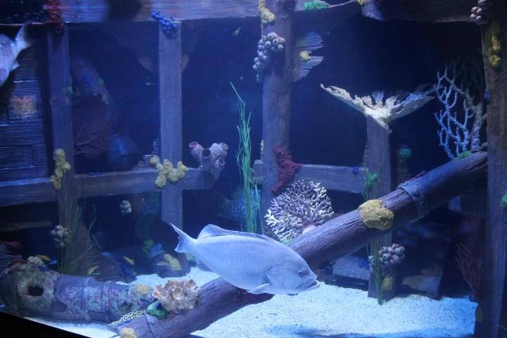 Houston-Aquarium4.JPG