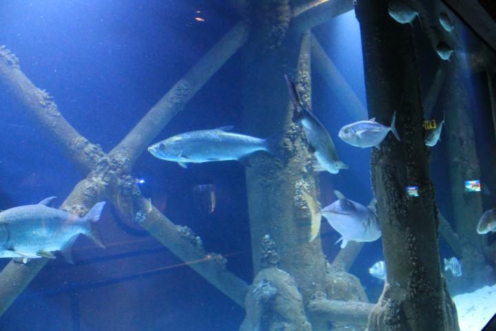 Houston-Aquarium7.JPG