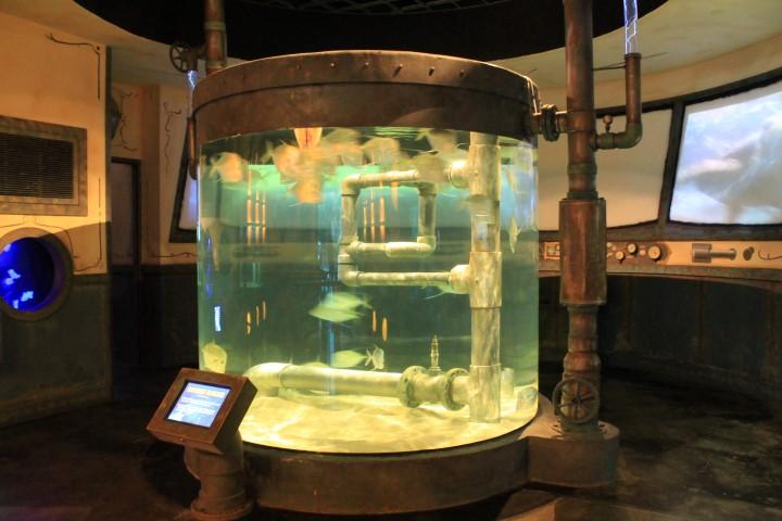 Houston-Aquarium8.JPG