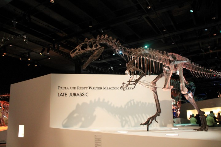 Houston-Museum-Of-Natural-Science7.JPG