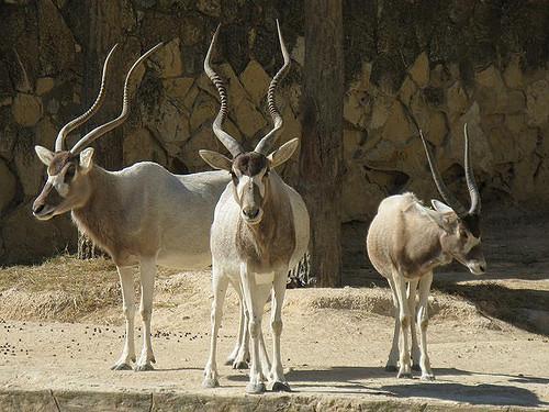 san-antonio-zoo2.jpg