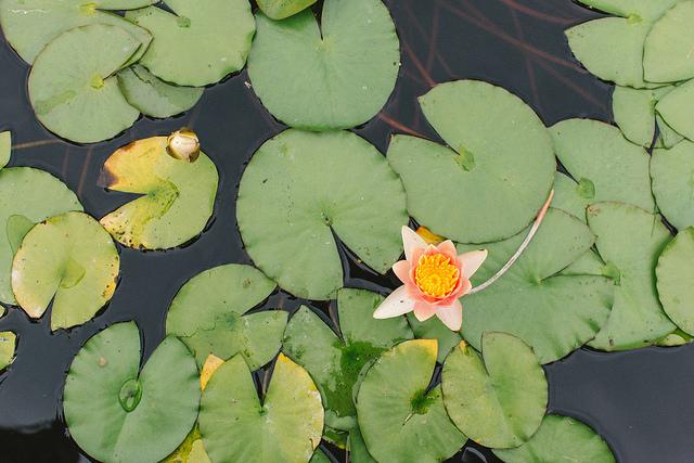 Olbrich-Botanical-Gardens.jpg
