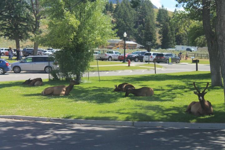 Yellowstone02.JPG