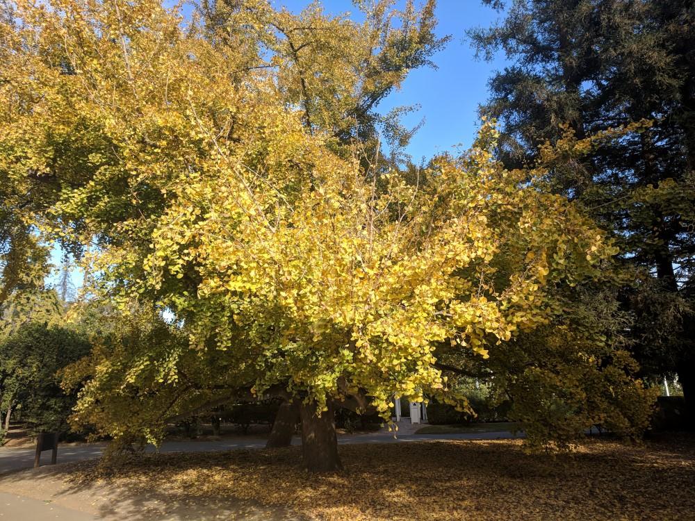 arboretum-fall-21.jpg