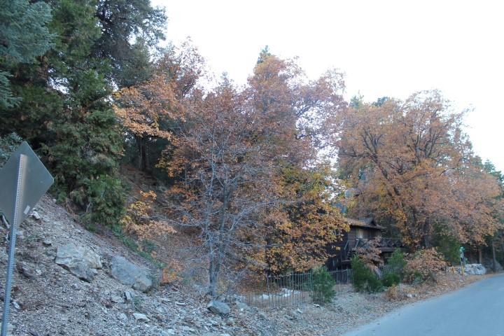 forest-falls.JPG