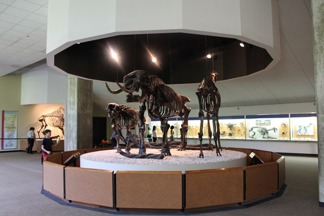 page-museum8.jpg