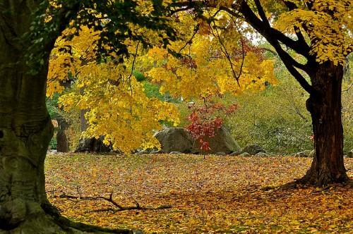 providence-foliage.jpg
