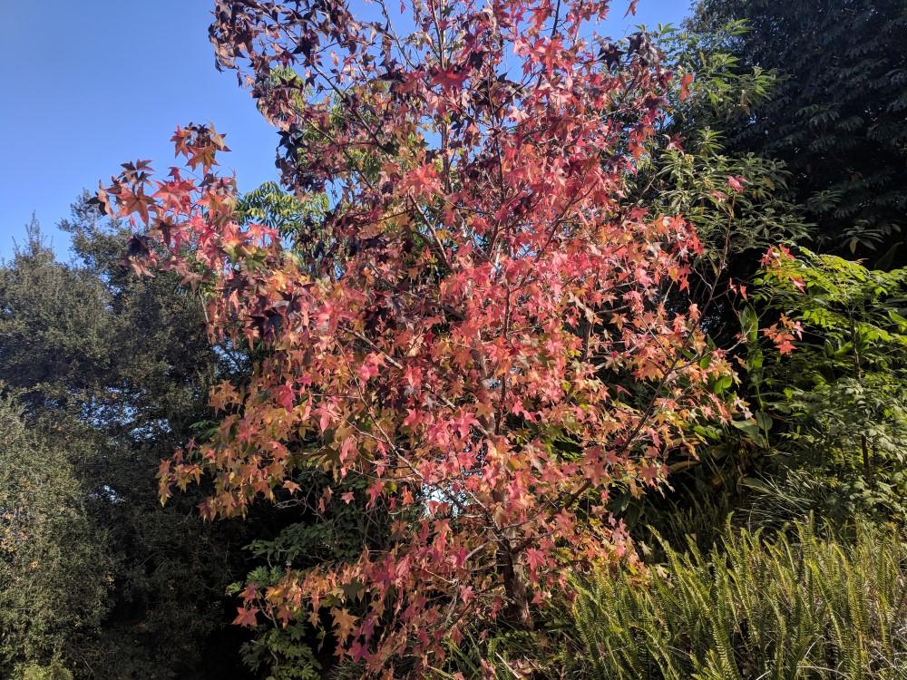 arboretum-fall-06.jpg
