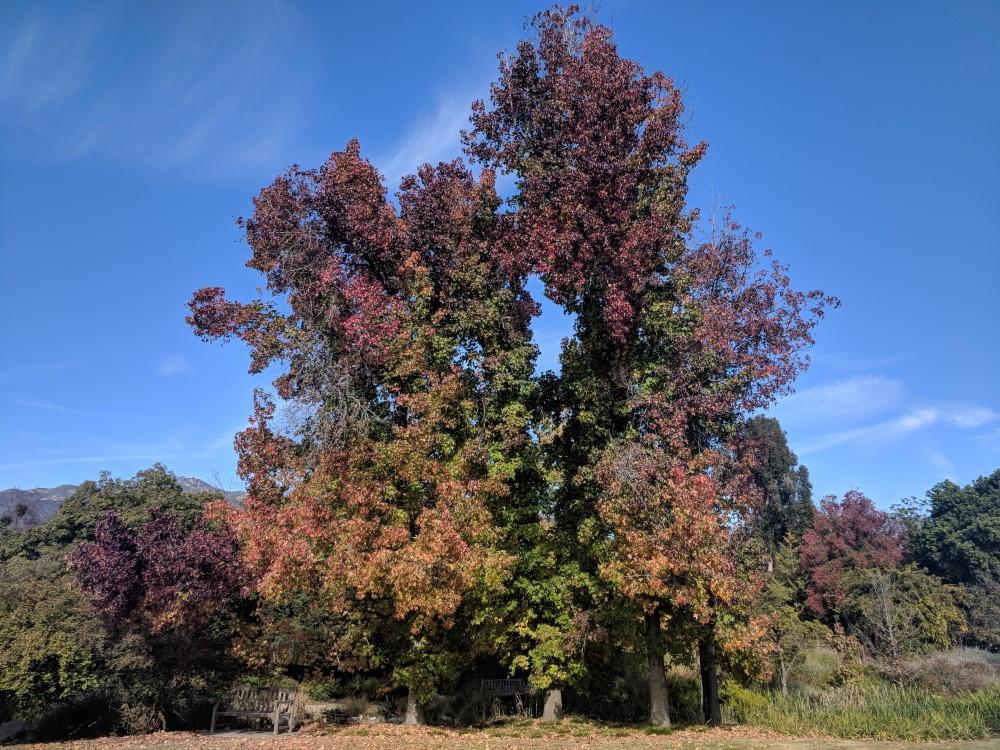 arboretum-fall-07.jpg