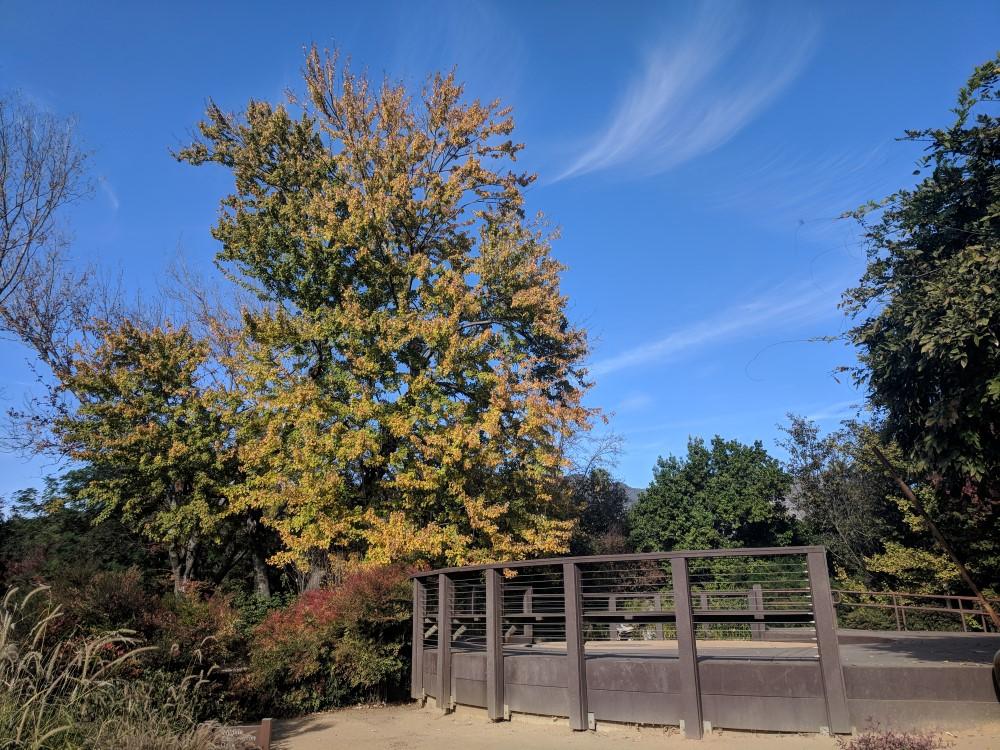 arboretum-fall-08.jpg