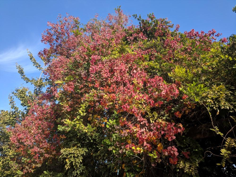 arboretum-fall-09.jpg