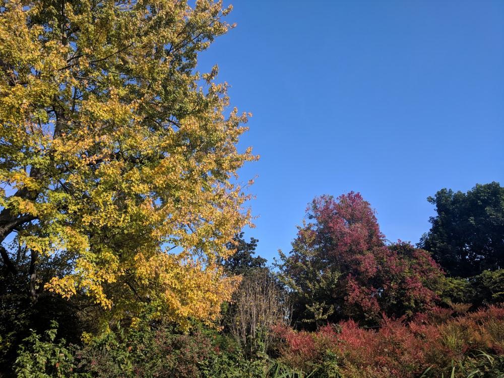 arboretum-fall-10.jpg