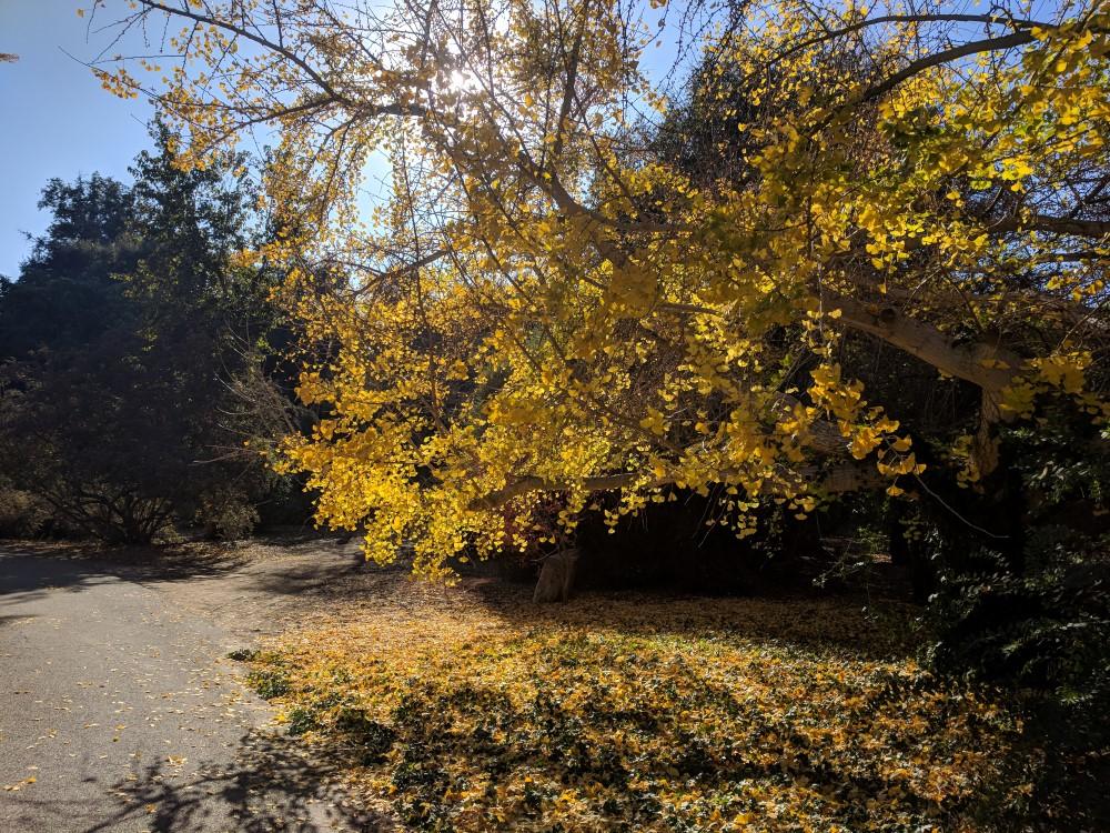 arboretum-fall-11.jpg