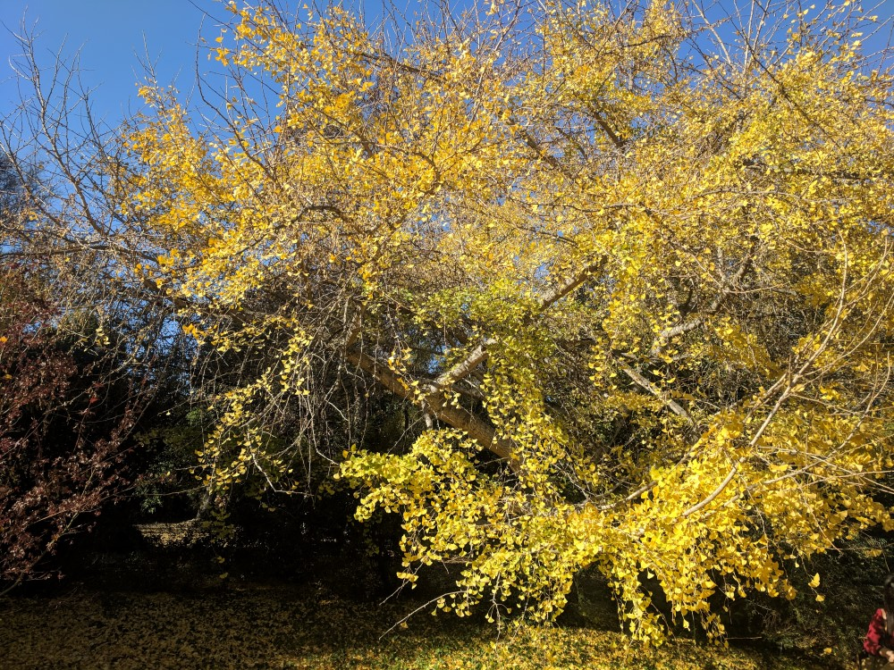arboretum-fall-12.jpg